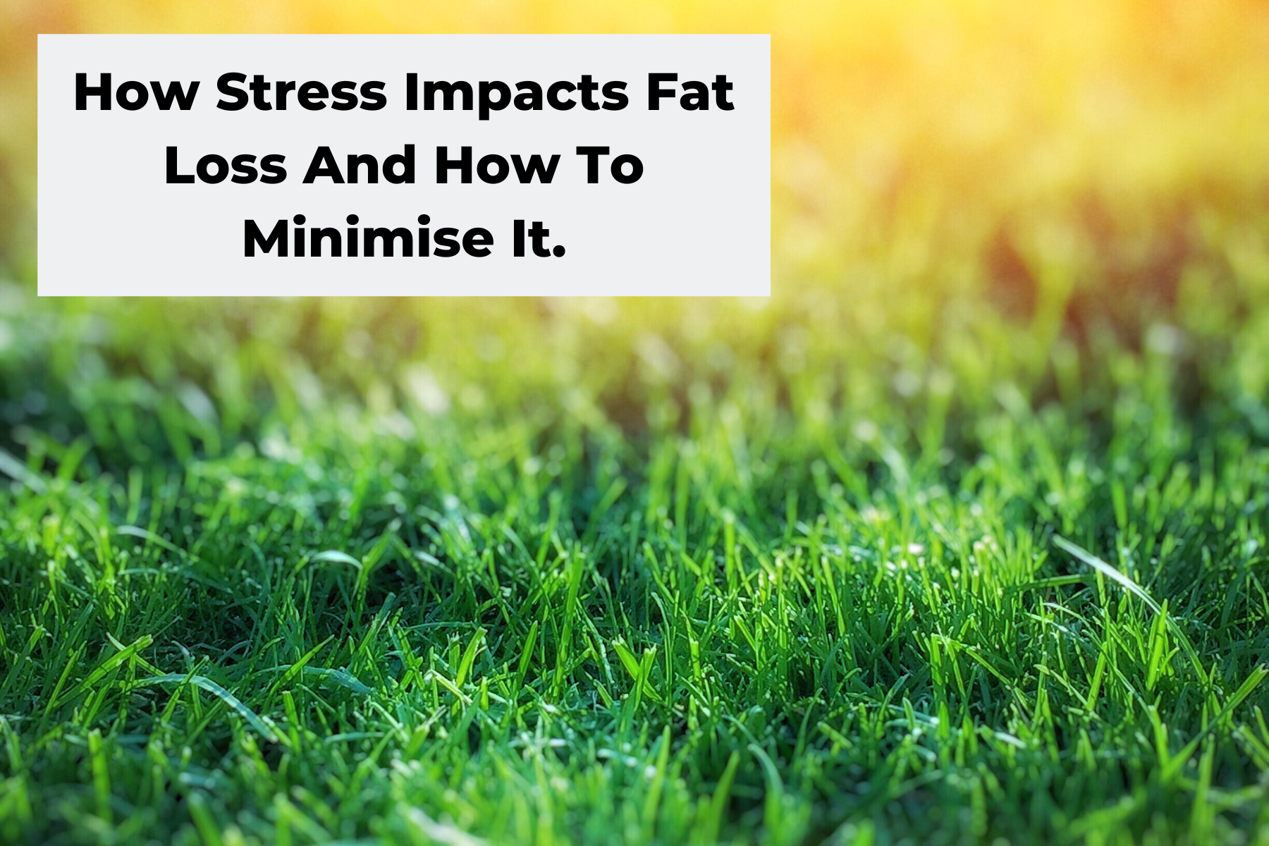 How Stress Impacts Fat Loss